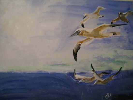 Ile aux oiseaux. ( 70 x 50 )